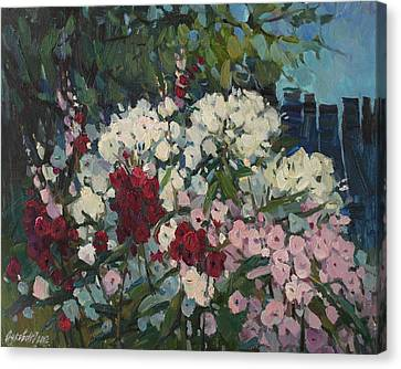 Phloxes In The Garden Canvas Print by Juliya Zhukova