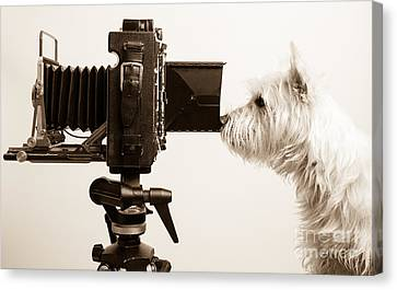 Pho Dog Grapher Canvas Print by Edward Fielding
