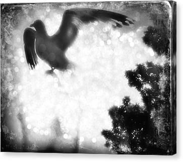 Phoenix IIi Canvas Print by Aurelio Zucco
