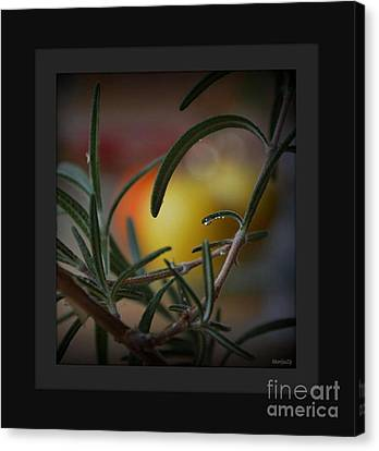 Photo For Your Soul... Canvas Print by Marija Djedovic
