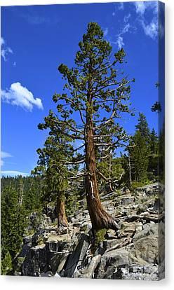Trees Near Emerald Bay Lake Tahoe Canvas Print