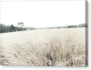 Photographic Sketch Of A Winter Landscape Canvas Print by Natalie Kinnear