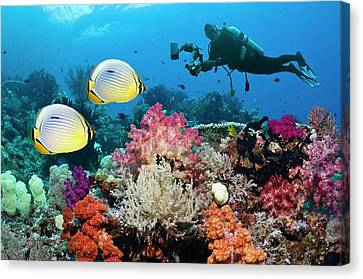 Photographing Butterflyfish On A Reef Canvas Print by Georgette Douwma