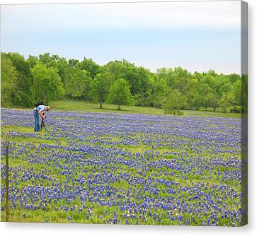 Photographing Texas Bluebonnets Canvas Print by Connie Fox