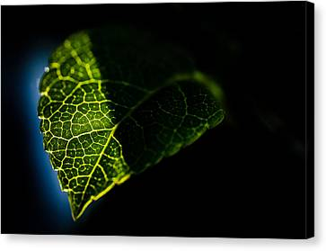 Photosynthesis Neighborhoods Canvas Print by Brian Xavier