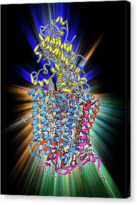 Photosynthetic Reaction Centre Canvas Print by Laguna Design