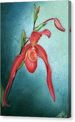 Phragmipedium Fire Cascade Canvas Print