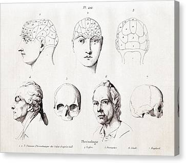 Phrenology Of Famous Heads Canvas Print