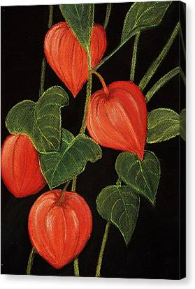 Physalis Canvas Print by Anastasiya Malakhova