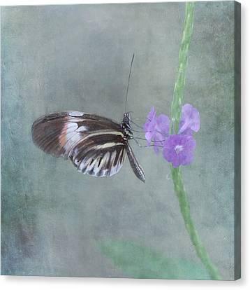Botanical Beach Canvas Print - Piano Key Butterfly by Kim Hojnacki