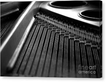 Piano Strings Canvas Print by Tim Hester