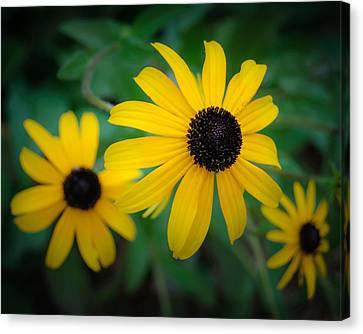 Pick Me Canvas Print by James Barber
