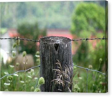 Picket Fence Wild Flowers Canvas Print by France Laliberte