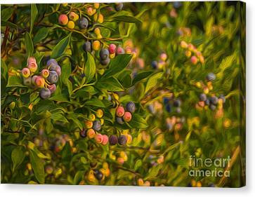 Pickin Blueberries Canvas Print