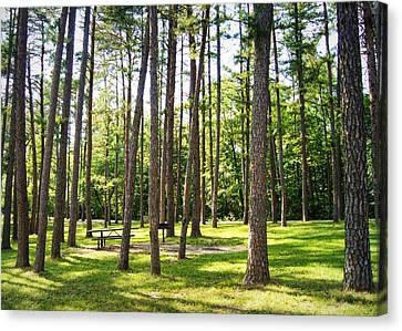 Picnic In The Pines Canvas Print