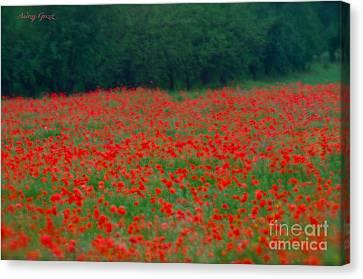 Pictorial Photography Poppy Fields At Galicia. Tribute To Alfred Stieglitz . Canvas Print by  Andrzej Goszcz