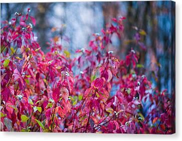 Picturesque Autumn - Featured 3 Canvas Print by Alexander Senin