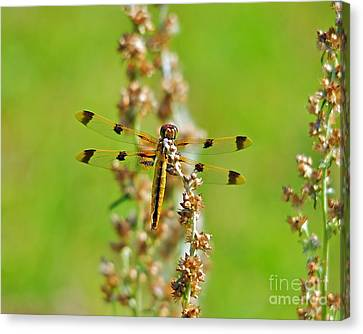 Picturesque Painted Canvas Print by Al Powell Photography USA