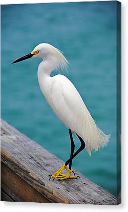 Pier Bird Canvas Print