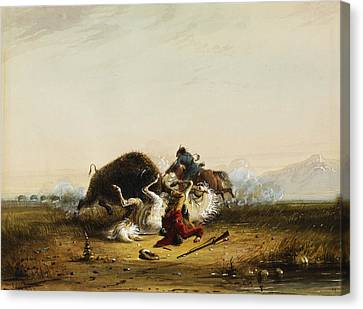 Pierre And The Buffalo Canvas Print by Alfred Jacob Miller