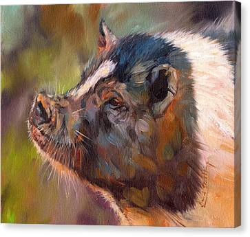 Piglet Canvas Print - Pig by David Stribbling