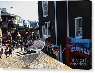 Pigeon Enjoying Pier 39 In San Francisco California 5d26132 Canvas Print