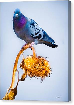 Canvas Print featuring the photograph Pigeon On Sunflower by Bob Orsillo