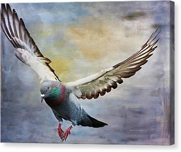 Pigeon On Wing Canvas Print by Deborah Benoit