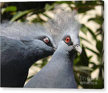 Pigeons Canvas Print by Jane Ford