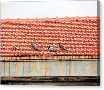 Canvas Print featuring the photograph Pigeons On Roof by Aaron Martens
