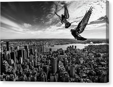 Pigeons On The Empire State Building Canvas Print