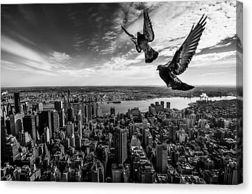 Pigeons On The Empire State Building Canvas Print by Sergiosousa