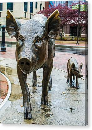 Pigs Of Asheville Canvas Print