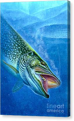 Pike And Ice Fishing Canvas Print by Jon Q Wright