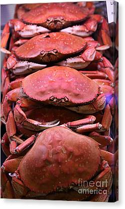 Pile Of Fresh San Francisco Dungeness Crabs - 5d20693 Canvas Print by Wingsdomain Art and Photography