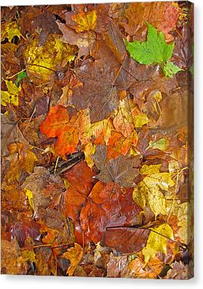 Pile Of Leaves Canvas Print by Todd Breitling