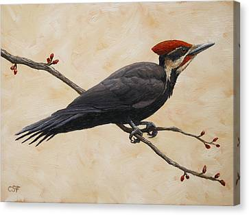 Pileated Woodpecker Canvas Print by Crista Forest