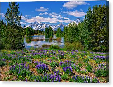 Pilgrim Creek Wildflowers Canvas Print by Greg Norrell