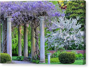 Pillars Of Wisteria Canvas Print by Michael Hubley