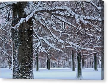 Canvas Print featuring the photograph Pin Oak Snow by Ann Murphy