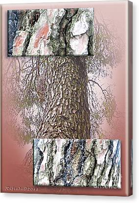 Pine Bark Study 1 - Photograph By Giada Rossi Canvas Print by Giada Rossi