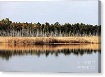 Pine Barrens Reflections Canvas Print by John Rizzuto