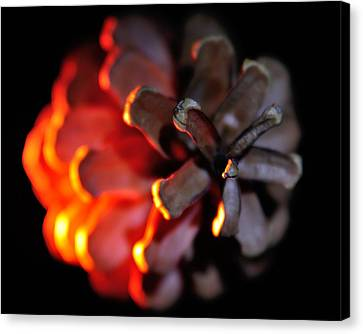 Pine Cone Fire Canvas Print by Todd Soderstrom
