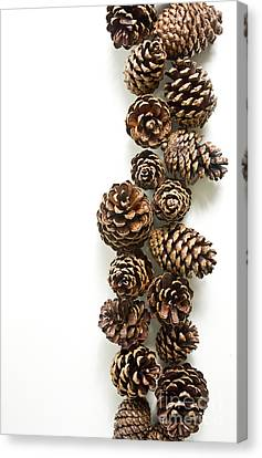 Pine Cones Canvas Print by Edward Fielding