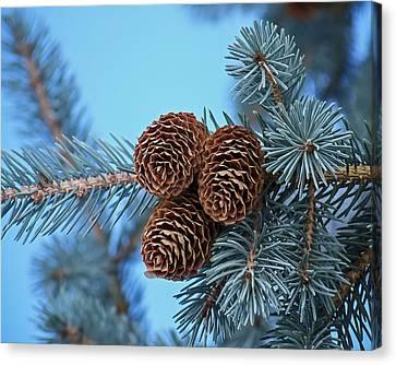 Pine Cones Canvas Print by Ernie Echols