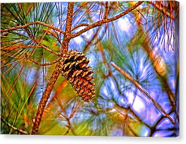 Pine Cones  Canvas Print by Marilyn Holkham