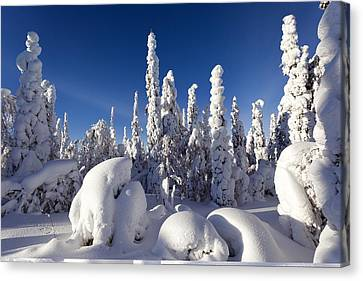 Pine Forest After Heavy Snowfall Canvas Print