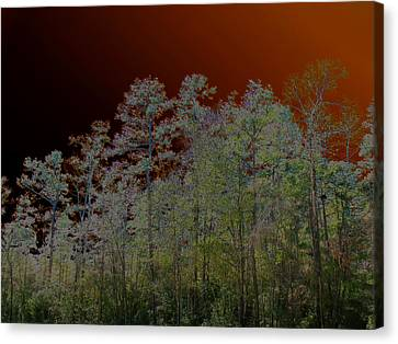 Pine Forest Canvas Print by Connie Fox