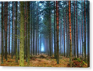 Pine Forest In Morning Fog Canvas Print by EXparte SE