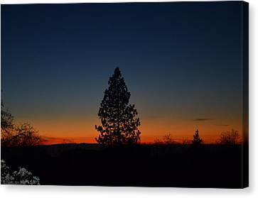Pine In The Prism Canvas Print